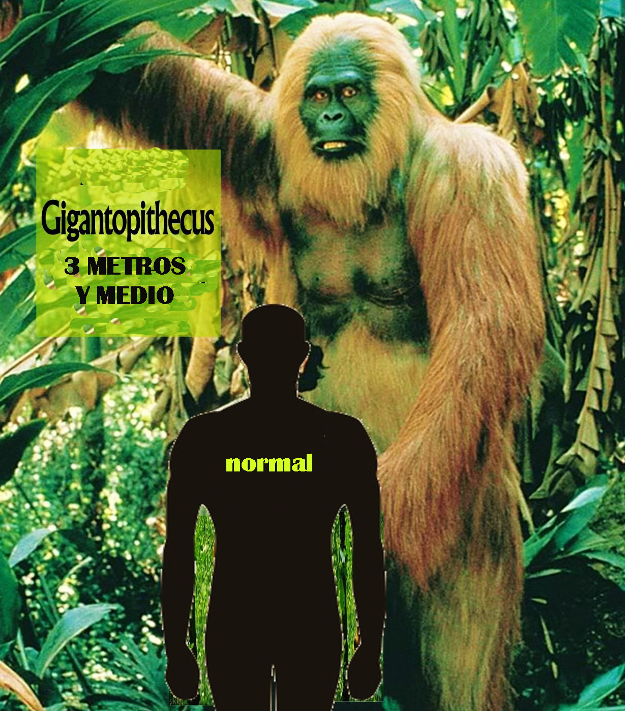 giganthopitecus