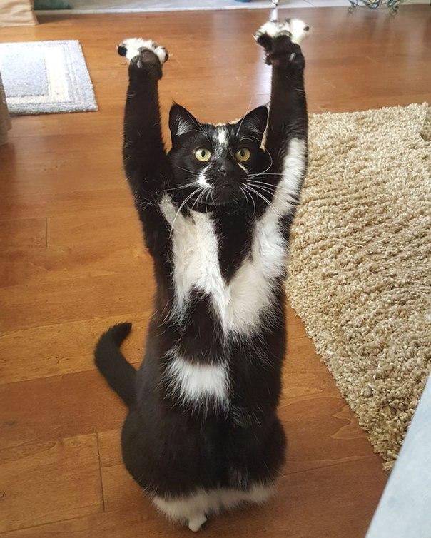 gato-patas-arriba-06